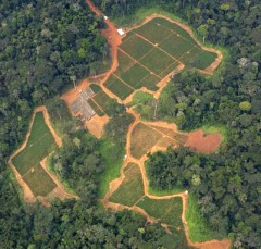 Deforestation for an oil palm plantation in Cameroon.  Photo courtesy of Greenpeace.