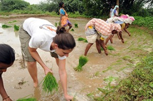 Manual rice transplanting by women's work group (and 1 Wash U student). Andhra Pradesh, 2008.