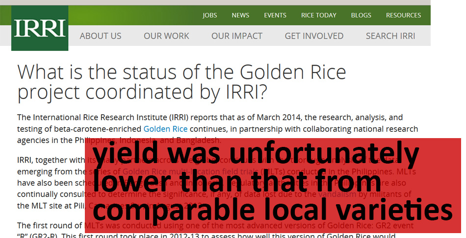 Golden Rice: Bringing a Superfood Down to Earth | fieldquestions
